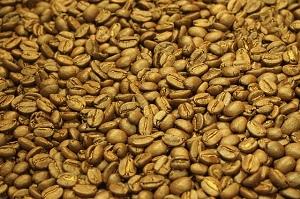 コーヒー豆 黄色