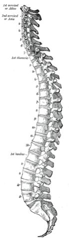 背骨 頸椎