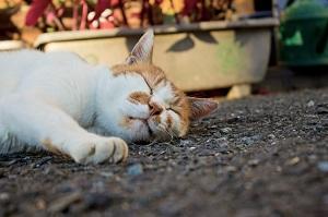 夏バテ 猫