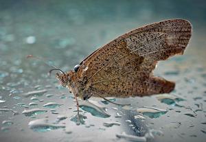 雨の日のチョウチョ