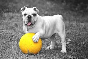 犬 ボール