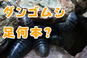 ダンゴムシ 足何本?