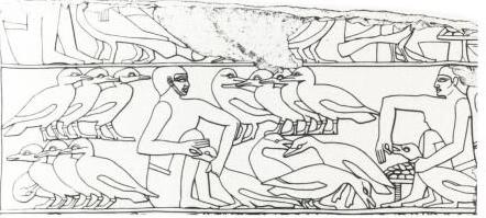 エジプト フォアグラ