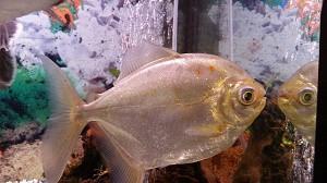fish-684020_640