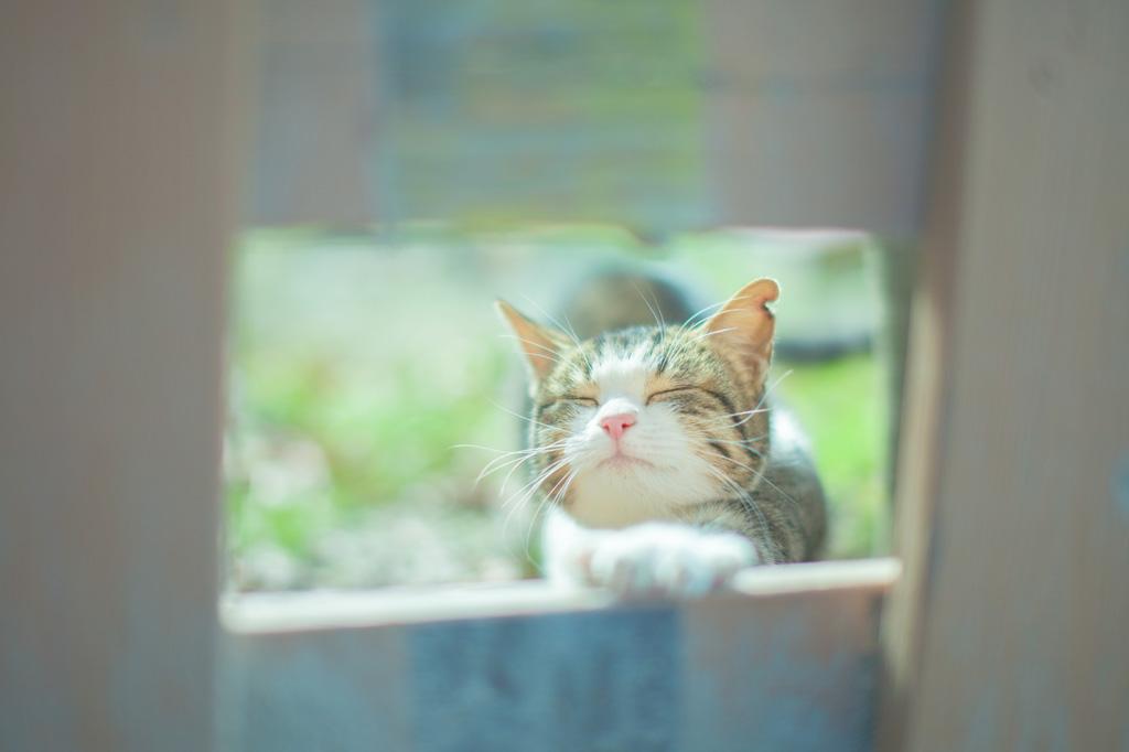 羽目を外す猫