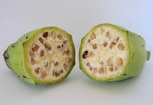 原種 バナナ