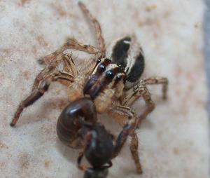クモの捕食