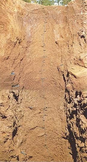 クロナガアリの巣