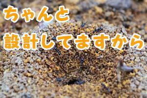 アリの巣 ちゃんと設計してますから