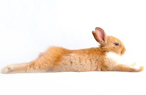 伸びたウサギ